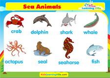 Sea animals vocabulary video