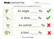 Birds can cant fly 1
