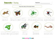 Insects tracing