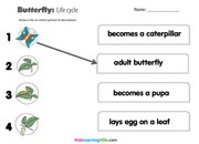 Life cycle butterfly 2