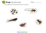 Life cycle frog 1