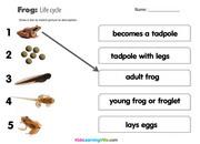 Life cycle frog 2