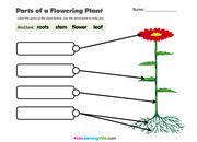 parts-of-flower