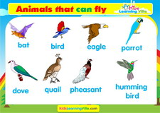 Birds vocabulary video