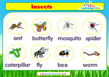 Insects vocabulary video