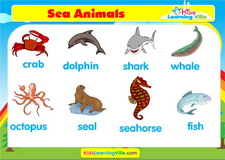 Sea animals vocabulary video