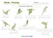 Birds tracing