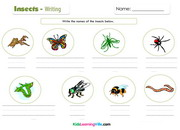 Insects writing