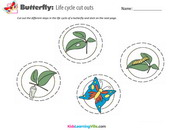 Life cycle butterfly 1
