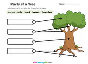 Parts of tree
